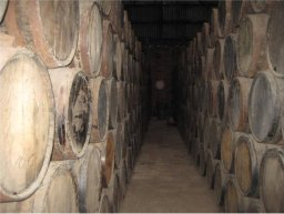Oak aging barrels for tequila.
